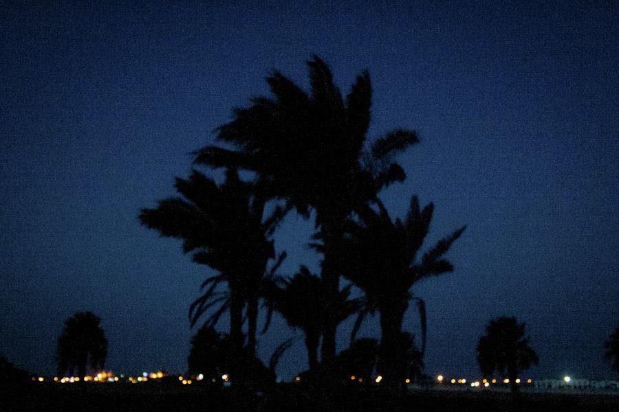 пальмы ночью