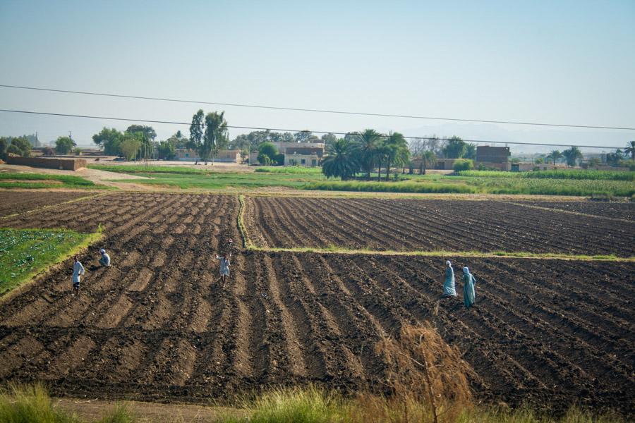 поле в египте