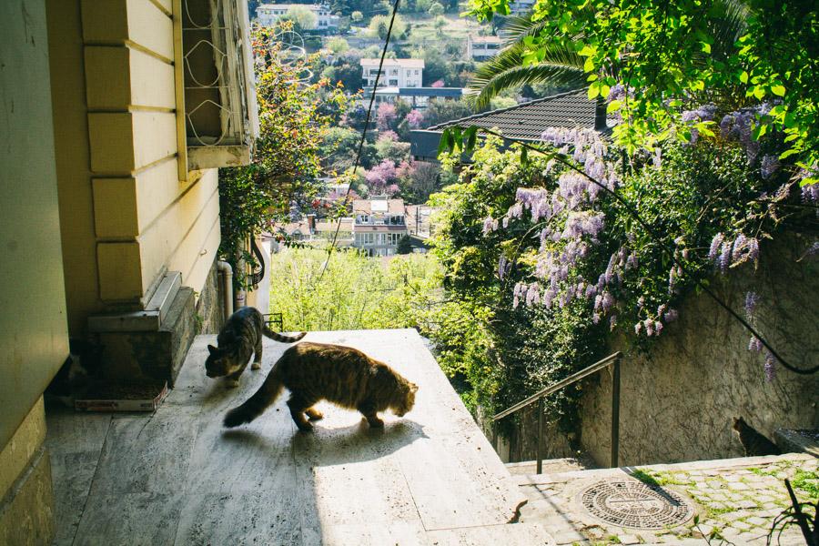 кошки во дворе